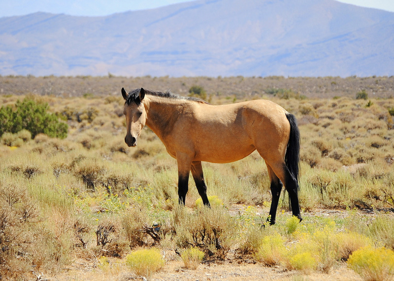 Wild Horses A Horse Is The Best Friend Ever