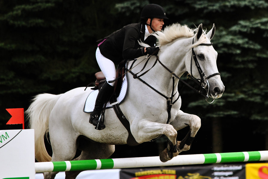 Master Horses Jumping - a horse is the best friend ever